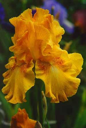 Фото. Цветы и букеты фото. Умение составлять букеты. Красивые букеты. Язык цветов. Ирисы