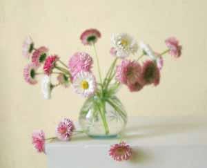 Фото. Цветы и букеты фото. Умение составлять букеты. Красивые букеты. Язык цветов. Маргаритки