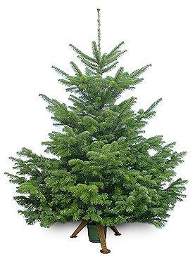 Фото. Полезные статьи. Новый год. Как сохранить елку. Новогодняя елка