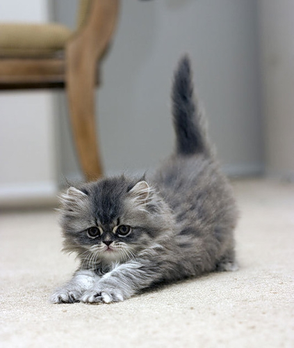 Котенок...