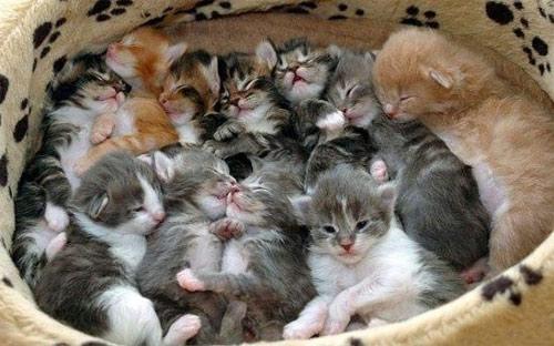 Котята - В тесноте, да не в обиде!
