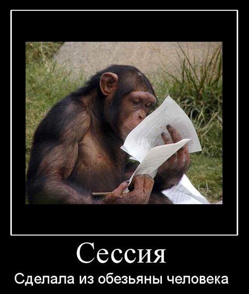 Сессия сделала из обезьяны человека