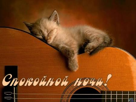 фото котенок спокойной ночи