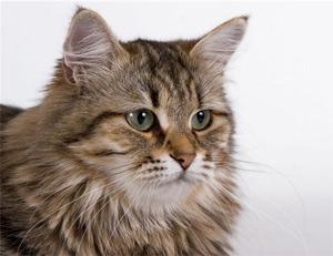 Всемирный день кошек - 1 марта.