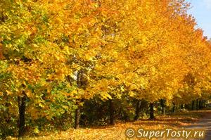 День работников леса - третье воскресенье сентября. фото осенний лес