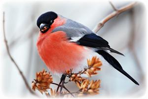 1 декабря - первый день зимы