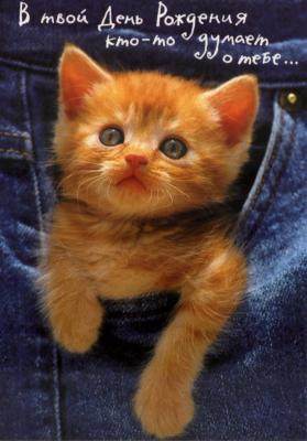 http://www.supertosty.ru/images/cards/cat_04.jpg
