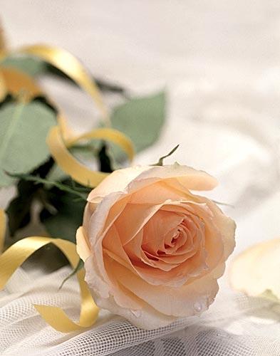 Поздравляем zoloto с днем рождения!!! - Страница 2 Rose_01