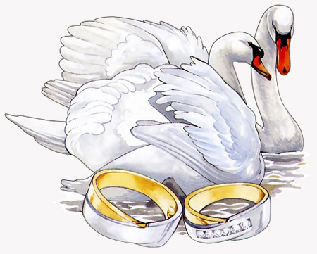 Свадебная открытка с лебедями №1006