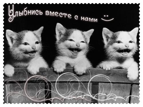 Видеокотека — смешные кошки видео