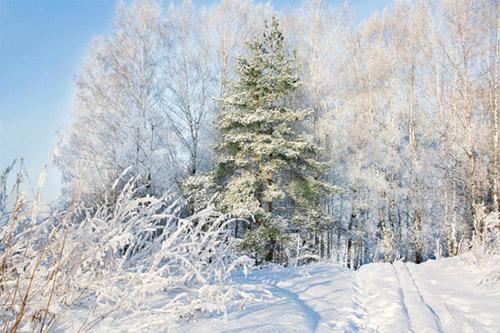 Картинки и открытки с зимой