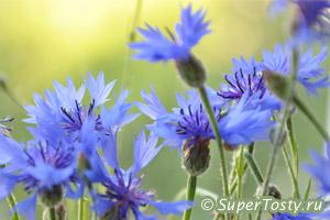 Международный день биологического разнообразия - 22 мая. фото Васильки