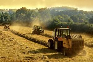 День работников сельского хозяйства и перерабатывающей промышленности - второе воскресенье октября. фото